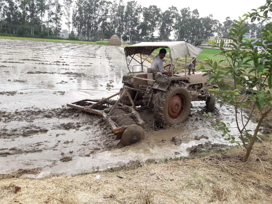 Rain, Haryana, Grain Crop, Villagers, Summer, Relief