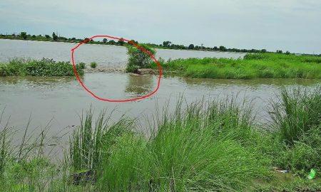 Crop Damaged, Due, Drain breakage, Punjab