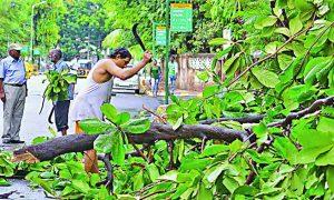 Saving, Trees, Delhi ,Artical
