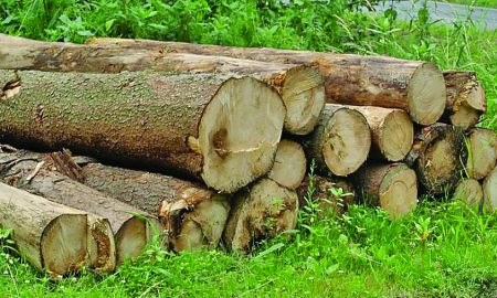 Deforestation, Large, Trees, Nearby Areas, Punjab