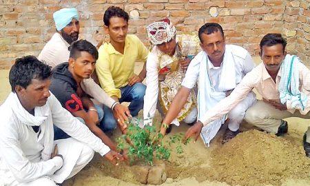 Groom, Plant, Tree