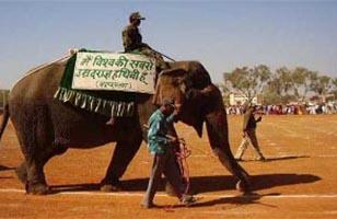 Elephant Vatsala