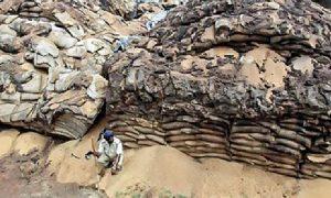 Amber Of Grains, Still Stigma Of Starvation