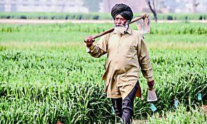 Nominal, Increase, Prices, Crops