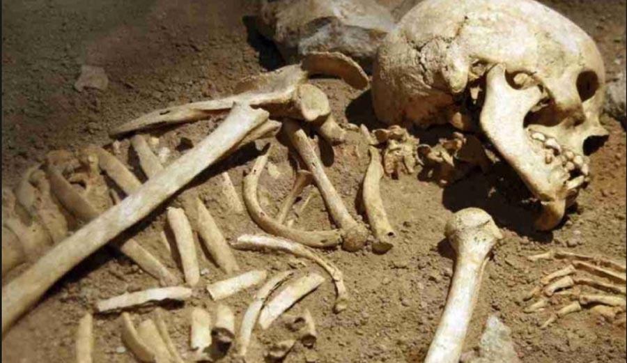 Skeleton, Rrave, Sri Lanka