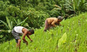 Permanent, Resolve, Farmers, Income