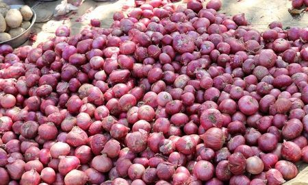 Maharashtra: The Farmers Got Only 1064 Rupees Of 750 Kg Of Onion In The Mandi, The Amount Sent To The Prime Minister In Anger