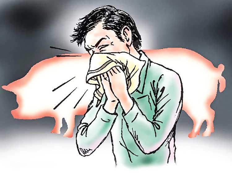 Swine flu in Rajasthan
