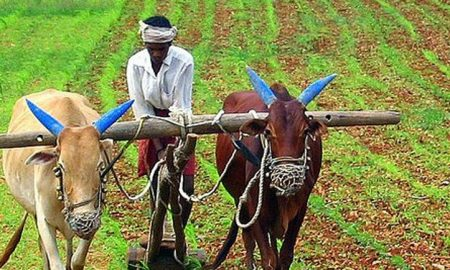 Budget 2019: Government Will Help Six Thousand Rupees Annually To Small Farmers