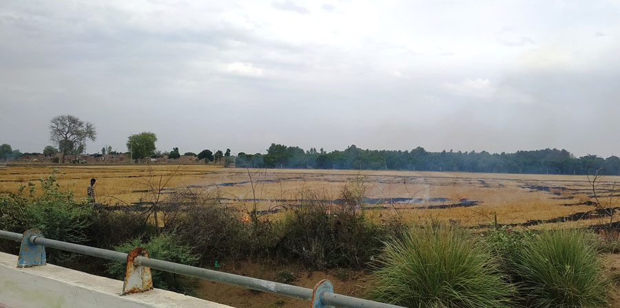 Residues of wheat burnt by farmers