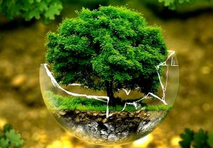 Meaningful efforts for environmental protection