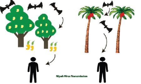 The failure of the health system is the knife of the nipah virus