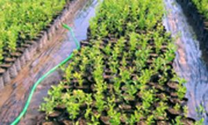 Message of environmental protection delivered by 1100 plants
