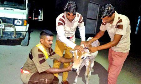 #Destitute animal, dera sacha sauda