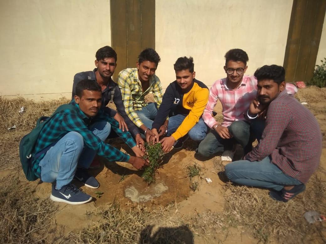Plantation,
