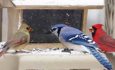 Birds animals