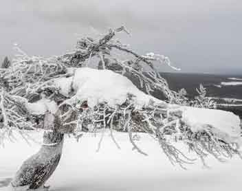 Life trembled due to snowy winds