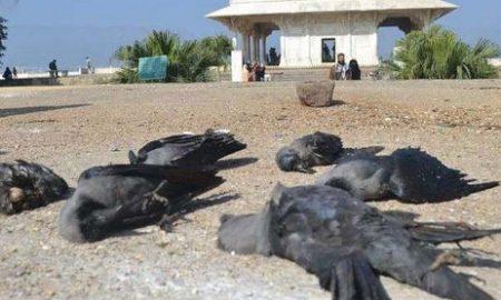 death crows
