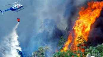 Make a concrete policy to protect the forest from fire