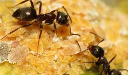 Talk of two ants