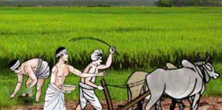 Agricultural Ordinances