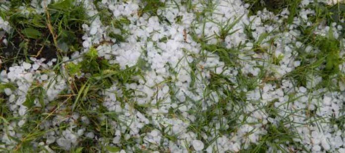 Hail Affected Farmers