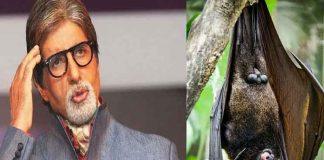 Bats sneak into Amitabh Bachchan's house