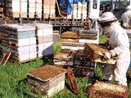 Honey production increased