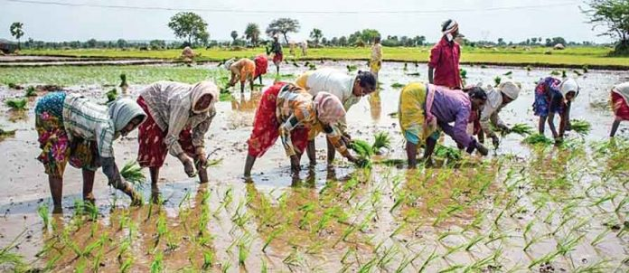 The role of agriculture will be decided afresh