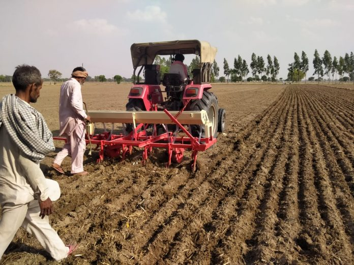 95 percent paddy cultivation is done in village Lohgarh