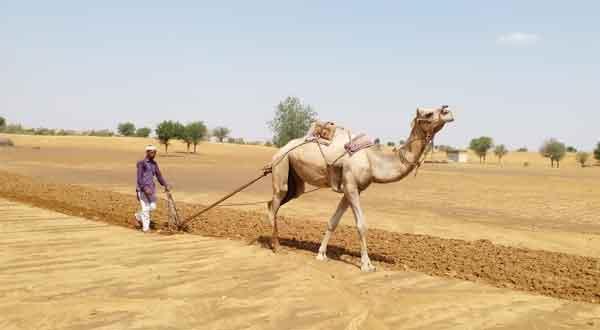 Rajasthan Farmer