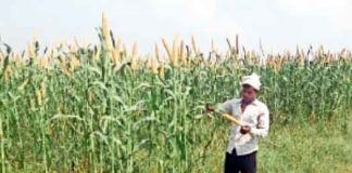 Purchase-of-millet